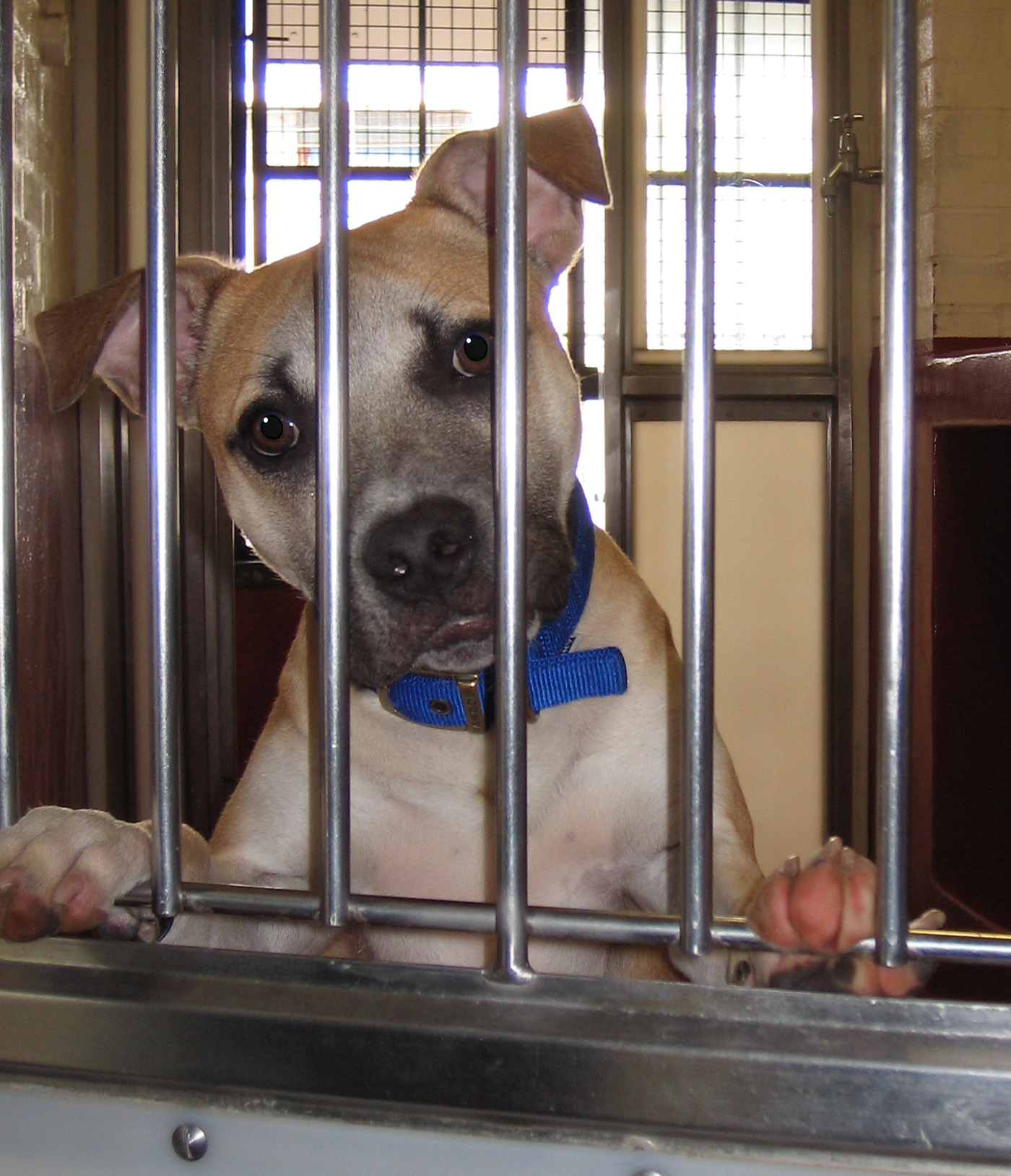 Battersea Dogs Home Contact